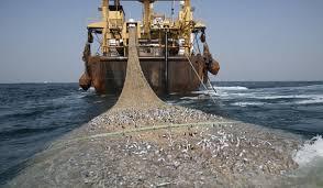 DPRD Kuatir Ilegal fishing Banyak Berlabu di Rohil