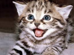 Tahu Gak? Mengapa Nabi Sangat Mencintai Kucing !